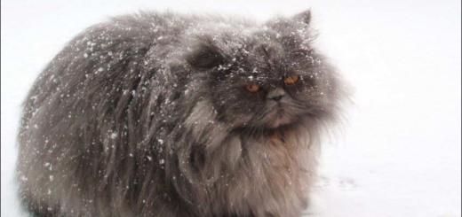 1360262272_cat-in-snow-002