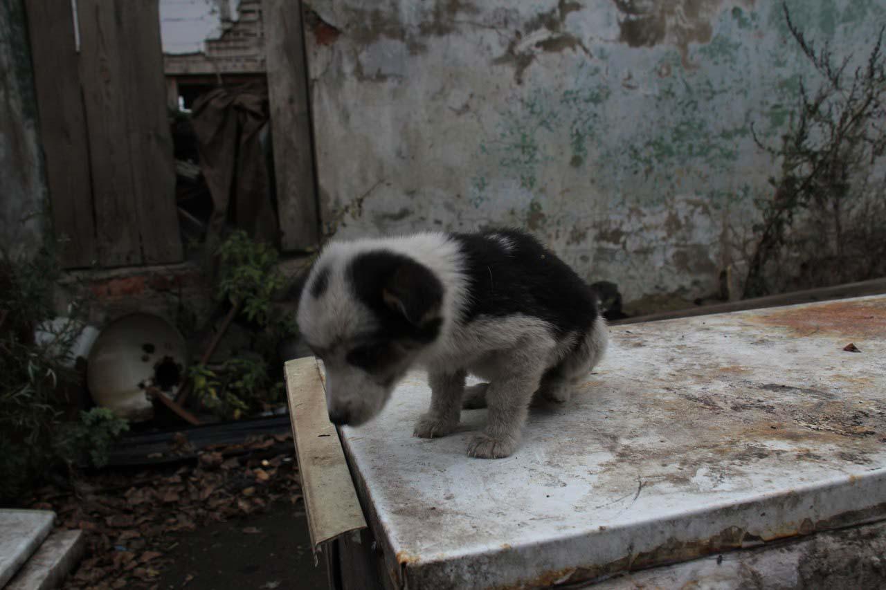 Картинки для детей - Собака | Картинки Detki.today | 853x1280