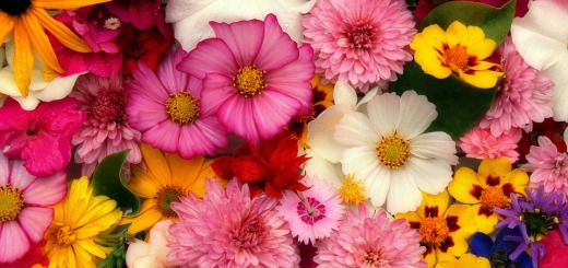 flowers-3644676_960_720