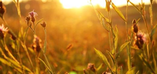 sunset-1284305_1280