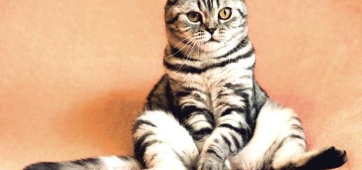 cat-2934720_1280