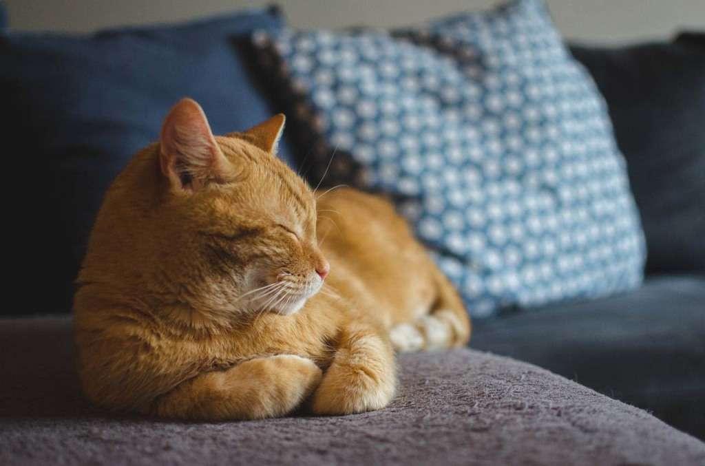cat-3059075_1280