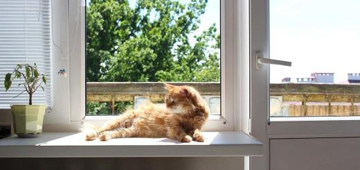 cat-4267163_1280