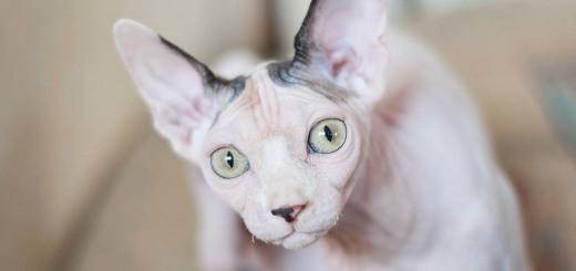 cat-2683212_1280