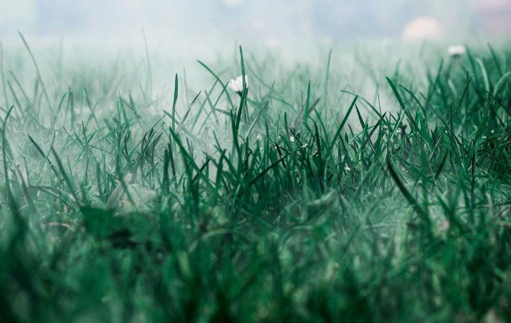 meadow-5648849_1280